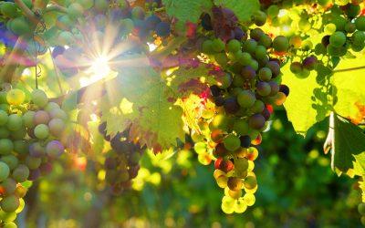 Comment déguster un vin ?